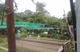 Sewage Problem in Pokfulam Village